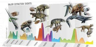 neologosattikis-Major-Extinction-Events